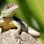 Fotos de lagartos