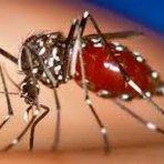 Número de infectados pelo vírus chikungunya no Brasil superou o de casos importados