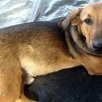 Cidade de SC dá desconto no IPTU para quem adotar animal de rua