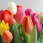 Flores para presentes de um jeito diferente