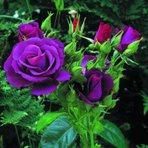 O beijo entre as flores plantadas de um jardim