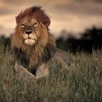 Em 40 anos, Terra perdeu mais de metade da fauna selvagem