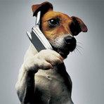 Quantas palavras os cachorros aprendem?