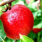 Poesias - A macieira