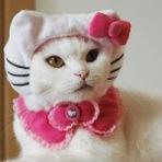Roupinhas para gatos