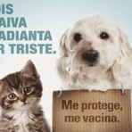 Animais - JUQUIÁ INICIA VACINAÇÃO CONTRA A RAIVA ANIMAL