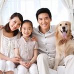 Como acostumar o novo cão em casa