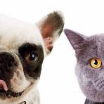 Clima seco: seu pet precisa de cuidados especiais