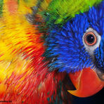 Animais - Criadores devem recadastrar seus animais silvestres