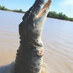 Animais - Austrália - o paraíso dos animais.