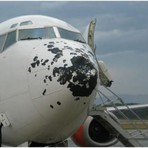 Internacional - Chuva de Granizo Danifica Aeronave