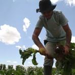 Meio ambiente - Juventude rural prefere viver no campo mas migra para cidade