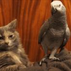 Lição de moral no gato