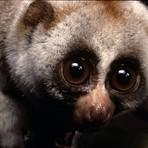 Animais - 10 animais fofos que podem te matar