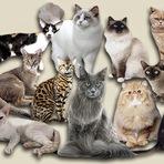 Animais - Deixe um gato surpreender você!