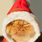 Animais - Garfi, o gato mais rabugento do mundo