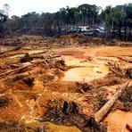 Desmatamento na Amazônia: um caminho sem volta