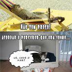 Gatos Engraçados – Domingo na Praia, não tem preço