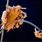 Objetos Comuns Transformam-se em Imagens Extraordinárias Através do Microscópio
