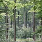 Meio ambiente - Plantio de florestas é estratégia de enfrentamento do aquecimento global