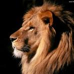 Utilidade Pública - Por que o leão é o mascote do Imposto de Renda?