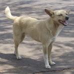 Software estima a população de cães e gatos abandonados e simula estratégias que beneficiam a saúde animal e humana