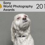 Participe de um dos maiores prêmios de fotografia do mundo: Sony World Photography Awards 2015
