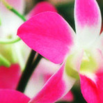 Arranjos de orquídeas são sempre elegantes
