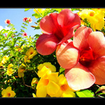 Flores para presentes