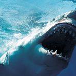 Animais - 20 Curiosidades incríveis sobre os tubarões