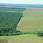 Meio ambiente - Qual a área mínima de Reserva Legal necessária para a conservação da biodiversidade?