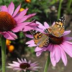 Terapia na arte de flores plantadas, como essa prática pode ajudar?