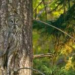 Curiosidades - A incrível arte da camuflagem dos animais