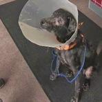 Opinião e Notícias - Veterinário descobre que cachorro tem alergia a humanos