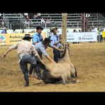 Animais - Rodeio, a crueldade Revelada - Vídeo