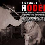 Animais - Rodeio, a crueldade revelada