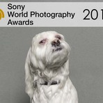 Fotógrafos, atenção: Sony World Photography Awards 2015
