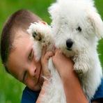 Animais - Quais as Vantagens e Desvantagens em Ter um Cão de Pequeno Porte?