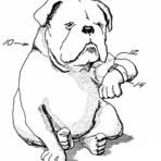 Animais - O relógio do cão