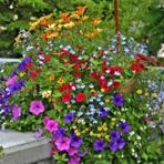 Arranjo de flor do campo: Presença constante no cotidiano