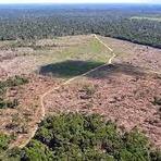 Meio ambiente - Desmatamento da Amazônia aumentou 290% no período de um ano