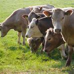 Brasil debate impactos da política agrícola com países das Américas