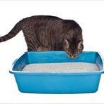 Animais - Higiene ou instinto? Descubra porque os gatos enterram as fezes