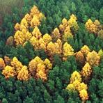 A floresta das Suásticas