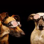 Fotos - Um ensaio recheado de expressões caninas!