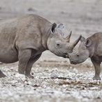 Curiosidades - Extinção: metade dos animais da Terra morreram desde a década de 1970