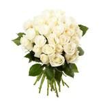 Entretenimento - Aprenda a cuidar do seu jardim de rosas brancas e saiba o preço de presentear quem se ama