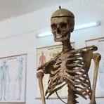 Curiosidades - Esqueleto de diretor é usado em aulas na Romena
