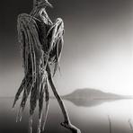 Fotos - O assombroso lago Natron