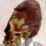 Exames de DNA dos crânios encontrados no Peru, mostram que não são humanos!